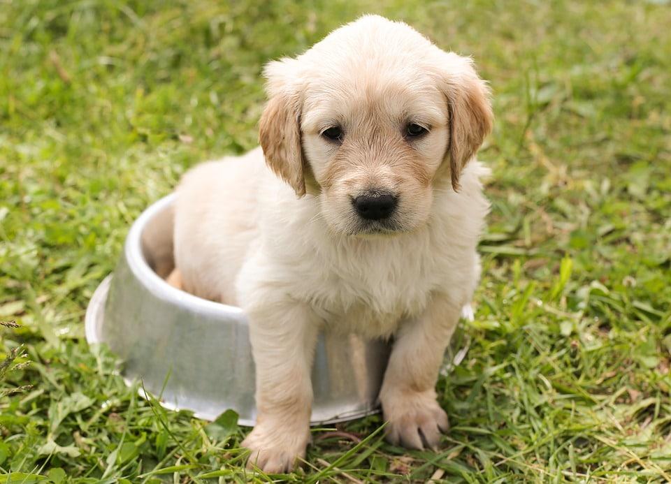 Madskåle, plejeartikler til din hund.